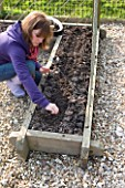 DESIGNER CLARE MATTHEWS: POTAGER PROJECT - CLARE PLANTING SEEDS OF BLACK TUSCAN KALE IN CHEATS FINE TILTH