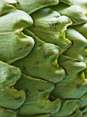 DESIGNER: CLARE MATTHEWS - CLOSE UP OF GREEN ARTICHOKE. VEGETABLE  EDIBLE  ABSTRACT