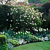 THE WHITE GARDEN AT CHENIES MANOR  BUCKS  WITH (L TO R) TULIPS MOUNT TACOMA  BLIZZARD & WHITE PARROT