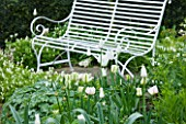ULTING WICK  ESSEX - THE WHITE GARDEN WITH WHITE BENCH AND TUIP SPRING GREEN AND DICENTRA ALBA