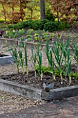 ULTING WICK  ESSEX : THE POTAGER IN SPRING WITH LEEKS