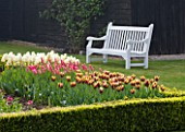ULTING WICK  ESSEX  SPRING: THE CUTTING GARDEN WITH TULIPS GAVOTA  MARIETTE AND IVORY FLOREDALE IN BOX HEDGE AND WHITE BENCH BEHIND