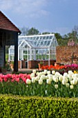 ULTING WICK  ESSEX  SPRING: THE CUTTING GARDEN WITH THE WHITE TULIP FLOREDALE  GREENHOUSE BEHIND