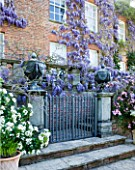 PASHLEY MANOR GARDEN  EAST SUSSEX  SPRING : LEAD URN ON PEDETAL SURROUNDED BY WISTERIA  CLEMATIS MONTANA RUBENS AND CHOISYA TERNATA