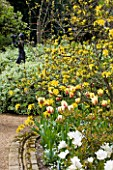 PASHLEY MANOR GARDEN  EAST SUSSEX  SPRING :PATH THROUGH WOODLAND WITH YELLOW AND RED TULIP WORLD EXPRESSION  YELLOW AZALEA AND SCULPTURE JOYFUL MOTHER BY MARY COX