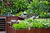 CHELSEA FLOWER SHOW 2009:  FRESHLY PREPPED GARDEN BY ARALIA. OUTDOOR KITCHEN WITH EDIBLE LIVING WALL PLANTED WITH BABY SALAD LEAVES RAISED GROWING BOXES WITH LETTUCE AND HERBS