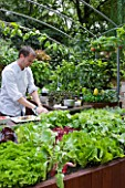 CHELSEA FLOWER SHOW 2009:  FRESHLY PREPPED GARDEN BY ARALIA. CHEF ANDREW NUTTER PREPARES FOOD IN OUTDOOR KITCHEN USING SALAD LEAVES AND HERBS FROM EDIBLE LIVING WALL