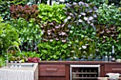CHELSEA FLOWER SHOW 2009:  FRESHLY PREPPED GARDEN BY ARALIA. STONE SINK IN OUTDOOR KITCHEN WITH EDIBLE LIVING WALL PLANTED WITH BABY SALAD LEAVES