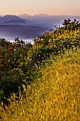 THE ROU ESTATE  CORFU: WILDFLOWERS IN THE HILLS BESIDE THE ROU ESTATE WITH THE ALBANIAN MOUNTAINS BEYOND  AT DAWN