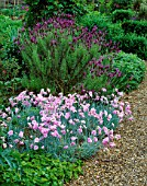 LAVENDER STOECHAS PENDUNCULATA AND DIANTHUS LILIAN BESIDE GRAVEL PATH.  THE ANCHORAGE  KENT. DESIGNER: WENDY FRANCIS
