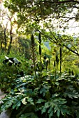THE ROU ESTATE  CORFU: STONE PATH AND WILDFLOWERS INCLUDING ACANTHUS SPINOSUS IN THE WOODLAND