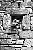 THE ROU ESTATE  CORFU: BLACK AND WHITE IMAGE OF STONE WALL WITH ALCOVE AND FERN