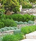 THE ROU ESTATE  CORFU: TIERED STONE TERRACE WITH PROSTRATE ROSEMARY AND CLIPPED SANTOLINA - RAISED BEDS