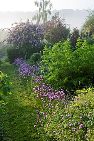 HOOK_END_FARM__BERKSHIRE_CHIVES_AND_KOLKWITZIA_BEHIND_THE_HOUSE_WITH_THE_DOWNS_IN_BACKGROUND