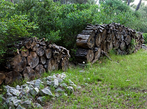 JACQUELINE_MORABITO__FRANCE__HUGE_LOGS_PILED_TOGETHER_AS_A_WALL_SCULPTURE