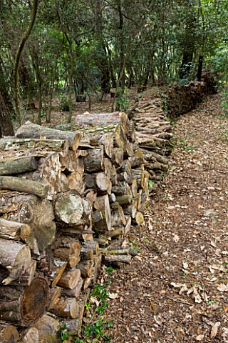 JACQUELINE_MORABITO__FRANCE__HUGE_LOGS_PILED_TOGETHER_TO_MAKE_A_WALL_IN_THE_WOODLAND