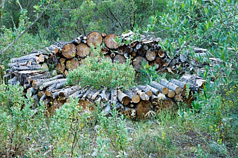 JACQUELINE_MORABITO__FRANCE__HUGE_LOGS_PILED_TOGETHER_TO_MAKE_A_CIRCULAR_WALL_IN_THE_WOODLAND