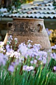 CORFU  GREECE: DESIGNER: DOMINIC SKINNER - MEDITTERANEAN STYLE GARDEN  - TULBAGHIA VIOLACEA AND TERRACOTTA CONTAINER