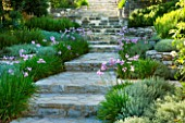 THE ROU ESTATE  CORFU  GREECE: DESIGNER: DOMINIC SKINNER - MEDITTERANEAN STYLE GARDEN - STONE STEPS WITH TULBAGHIA VIOLACEA