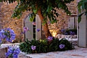 THE ROU ESTATE  CORFU  GREECE: DESIGNER: DOMINIC SKINNER - MEDITTERANEAN STYLE GARDEN - GRAVEL PATH AND AGAPANTHUS