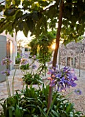 THE ROU ESTATE  CORFU  GREECE: DESIGNER: DOMINIC SKINNER - MEDITTERANEAN STYLE GARDEN - GRAVEL PATH AND AGAPANTHUS AT SUNRISE