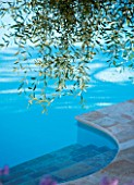 CORFU  GREECE: DESIGNER: DOMINIC SKINNER - SWIMMING POOL WITH OVERHANGING BRANCHES OF OLIVE TREE