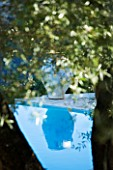 CORFU  GREECE: DESIGNER: DOMINIC SKINNER - SWIMMING POOL WITH OVERHANGING BRANCHES OF OLIVE TREE AND REFLECTION OF TERRACOTTA CONTAINER IN WATER