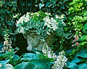 SHADE: WHITE THEMED STONE URN PLANTED WITH MARGUERITES  HELICHRYSUM AND NICOTIANA LIME GREEN.  DESIGNER: ANTHONY NOEL