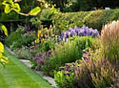 MEADOW FARM  WORCESTERSHIRE: THE LONG BORDER - NORTH SIDE WITH PURPLE/YELLOW THEMED PERENNIAL PLANTING
