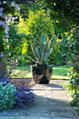 MEADOW FARM  WORCESTERSHIRE: AGAVE AMERICANA IN BLACK CONTAINER