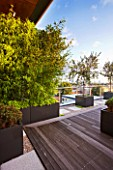 DESIGNER: CHARLOTTE ROWE  LONDON: ROOF GARDEN - WOODEN DECKING WITH RAISED BED PLANTED WITH BAMBOO - PHYLLOSTACHYS AUREA, DECKS, DECKING, FORMAL, TOWN, CITY, CONTEMPORARY