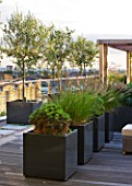 DESIGNER: CHARLOTTE ROWE  LONDON: ROOF GARDEN - DECKED WALKWAY PAST WOODEN PERGOLA AND CONTAINERS PLANTED WITH PENNISETUM HAMELYN  PINUS MUGO AND OLIVE TREES, MODERN, TOWN, CITY, FORMAL