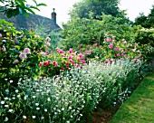 ROSES ISPAHAN AND CONSTANCE SPRY AND LYCHNIS CORONARIA OCULATA. ASHTREE COTTAGE  WILTSHIRE. DESIGNER: W LAUDERDALE