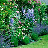 PERGOLA WITH HONEYSUCKLE  DELPHINIUMS  NEPETA  ROSE COMPTE DE CHAMBORD AND R. VEILCHENBLAU. ASHTREE COTTAGE  WILTS