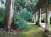 DOMAINE DU RAYOL  FRANCE: THE MAIN PERGOLA WITH THE FOLIAGE OF ACACIA PODALYRIIFOLIAII AND A EUCALYPTUS POLYANTHEMOS (SILVER DOLLAR GUM)