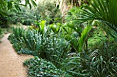 DOMAINE DU RAYOL  FRANCE: THE NEW ZEALAND GARDEN WITH PHORMIUM TENAX AND RHOPALOSTYLIS SAPIDA (NIKAU PALM  SHAVING BRUSH PALM)