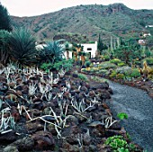THE CACTUS GARDEN AT JARDIN CANARIO  GRAND CANARIA  SPAIN.