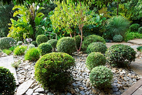 DESIGNER_JEANLAURENT_FELIZIA__FRANCE_AREA_OF_SLATE_WITH_CLIPPED_TOPIARY_BALLS_AND_BARK_OF_ARBUTUS_GL