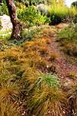 DESIGNER: JEAN-LAURENT FELIZIA  FRANCE: PATH BESIDE CAREX TESTACEA