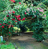 BOUGAINVILLEA TRAILS OVER ARCHWAY WITH SEAT BENEATH. JARDIN CANARIO  GRAND CANARIA  SPAIN