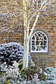 PETTIFERS  OXFORDSHIRE: GARDEN IN SNOW IN WINTER - VIEW TO THE BACK OF THE HOUSE WITH WHITE TRUNK OF BIRCH (BETULA JACQUEMONTII) AND LUNNARIA ANNUA