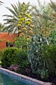 DESIGNERS ERIC OSSART AND ARNAUD MAURIERES  MOROCCO: AL HOSSOUN - AGAVE DESMETTIANA IN BLOOM BESIDE OPUNTIA SP IN POOL COURTYARD