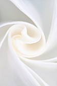 DESIGNERS ERIC OSSART AND ARNAUD MAURIERES  MOROCCO: AL HOSSOUN: CLOSE UP ABSTRACT IMAGE OF THE WHITE FLOWER OF BRUGMANSIA X CANDIDA