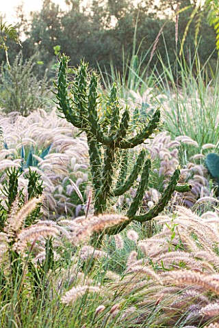 DESIGNERS_ERIC_OSSART_AND_ARNAUD_MAURIERES__MOROCCO_DAR_IGDAD__DRY_GARDEN_WITH_BORDER_OF_PENNISETUM_