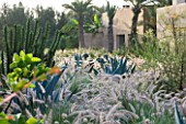 DESIGNERS ERIC OSSART AND ARNAUD MAURIERES  MOROCCO: DAR IGDAD - DRY GARDEN WITH BORDER OF PENNISETUM SETACEUM  AGAVES  AND CYLINDROPUNTIA SUBULATA - EVES NEEDLE CACTUS