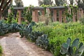DESIGNERS ERIC OSSART AND ARNAUD MAURIERES  MOROCCO: DAR IGDAD - DRY GARDEN WITH BORDER OF CACTUS - OPUNTIA FICUS - INDICA   THE BARBARY FIG