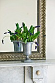 DESIGNER CLARE MATTHEWS: HOUSEPLANT - MUSCARI LATIFOLIA IN AN ALUMINIUM CONTAINER BESIDE A MIRROR ON THE MANTELPIECE