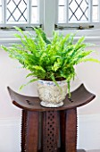 DESIGNER CLARE MATTHEWS: HOUSEPLANT PROJECT - CONTAINER UNDER WINDOW PLANTED WITH BOSTON FERN - NEPHROLEPSIS EXALTATA BOSTONIENSIS