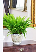 DESIGNER CLARE MATTHEWS: HOUSEPLANT PROJECT - CONTAINER UNDER MIRROR PLANTED WITH BOSTON FERN - NEPHROLEPSIS EXALTATA BOSTONIENSIS