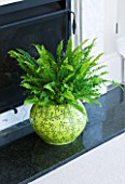 DESIGNER CLARE MATTHEWS: HOUSEPLANT PROJECT - YELLOW CONTAINER IN FIREPLACE PLANTED WITH BOSTON FERN - NEPHROLEPSIS EXALTATA BOSTONIENSIS